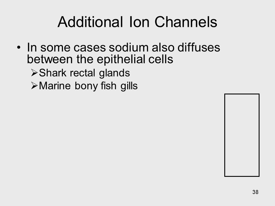 38 Additional Ion Channels In some cases sodium also diffuses between the epithelial cells Shark rectal glands Marine bony fish gills