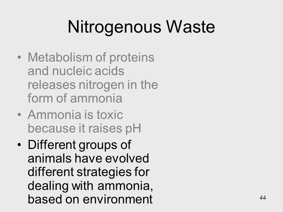 44 Nitrogenous Waste Metabolism of proteins and nucleic acids releases nitrogen in the form of ammonia Ammonia is toxic because it raises pH Different