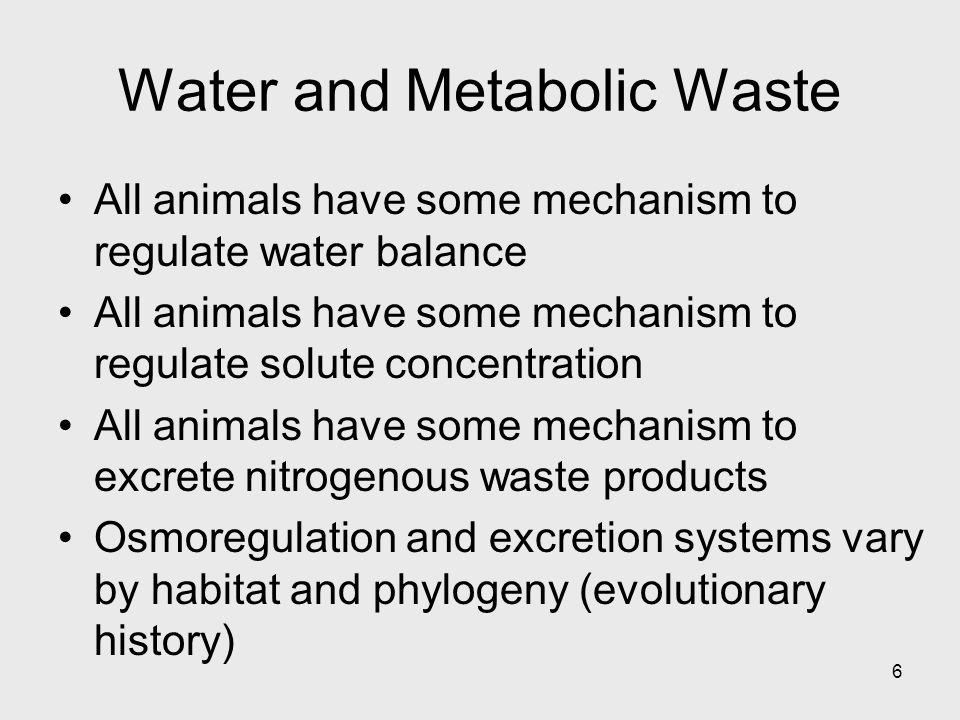 6 Water and Metabolic Waste All animals have some mechanism to regulate water balance All animals have some mechanism to regulate solute concentration
