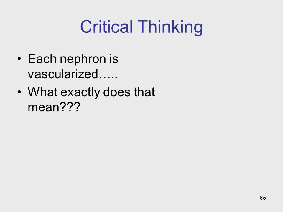 65 Critical Thinking Each nephron is vascularized….. What exactly does that mean???