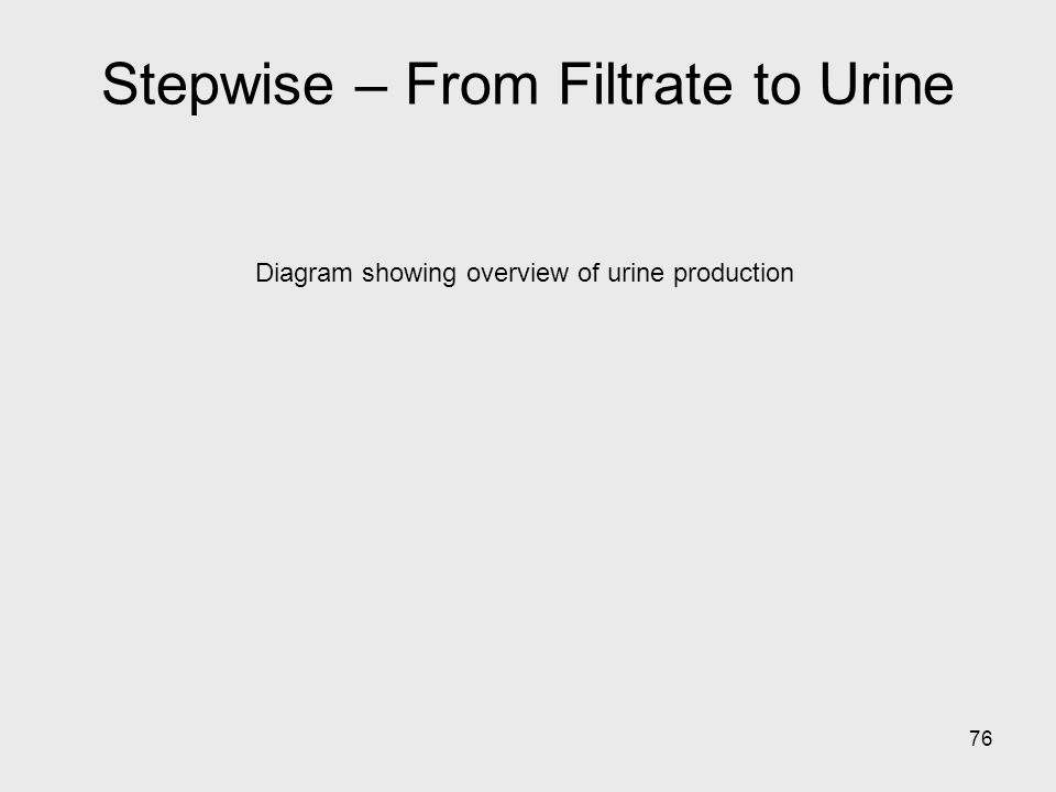 76 Diagram showing overview of urine production Stepwise – From Filtrate to Urine