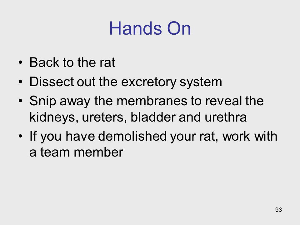 Hands On Back to the rat Dissect out the excretory system Snip away the membranes to reveal the kidneys, ureters, bladder and urethra If you have demo
