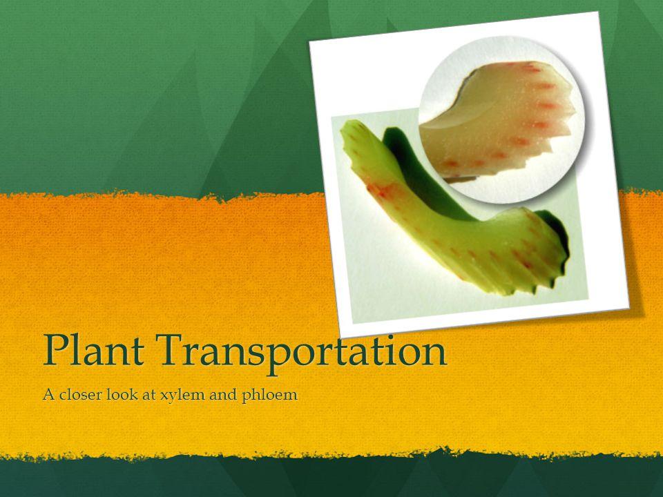 Plant Transportation A closer look at xylem and phloem