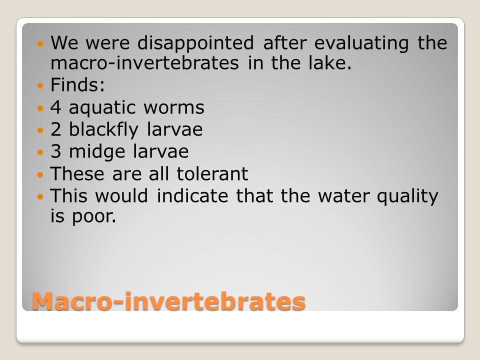 Macro-invertebrates We were disappointed after evaluating the macro-invertebrates in the lake. Finds: 4 aquatic worms 2 blackfly larvae 3 midge larvae