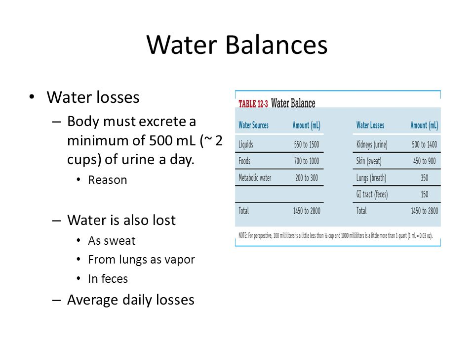 Water Balances Water losses – Body must excrete a minimum of 500 mL (~ 2 cups) of urine a day. Reason – Water is also lost As sweat From lungs as vapo