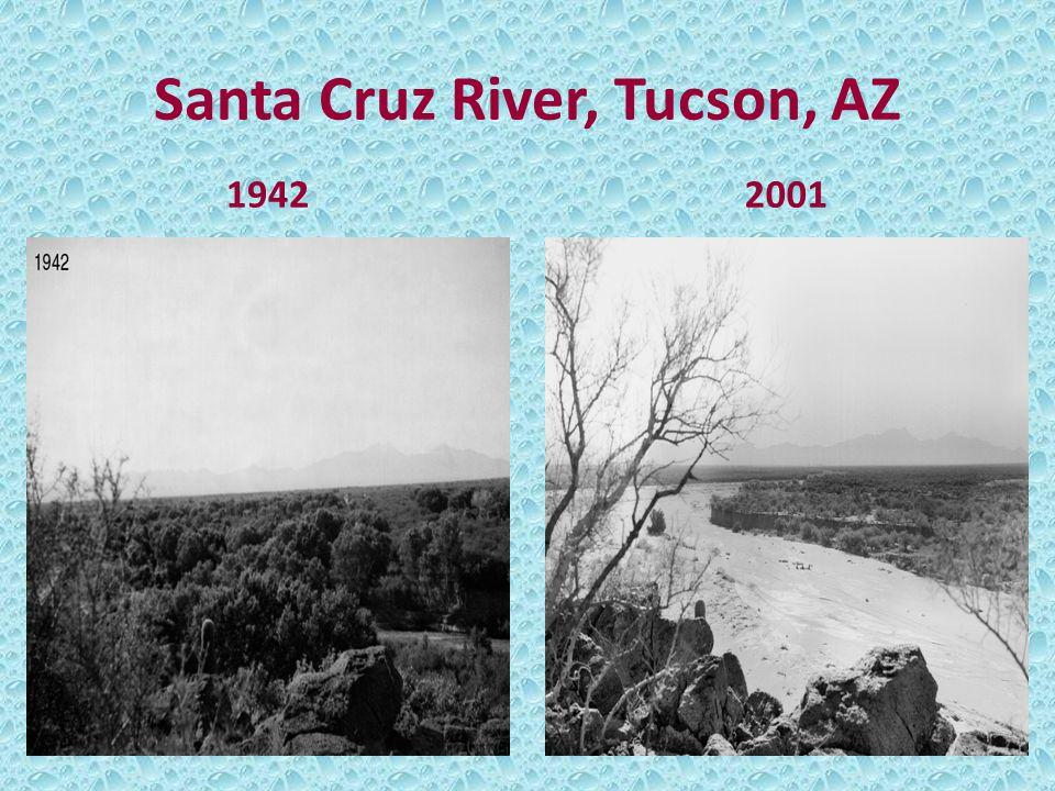 Santa Cruz River, Tucson, AZ 19422001