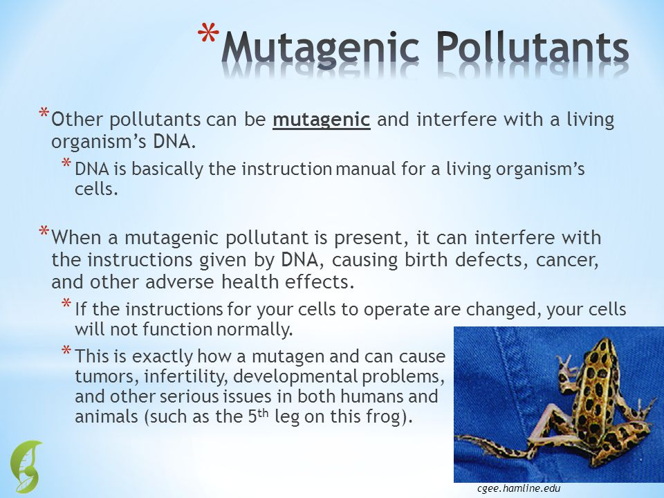 * Other pollutants can be mutagenic and interfere with a living organisms DNA. * DNA is basically the instruction manual for a living organisms cells.