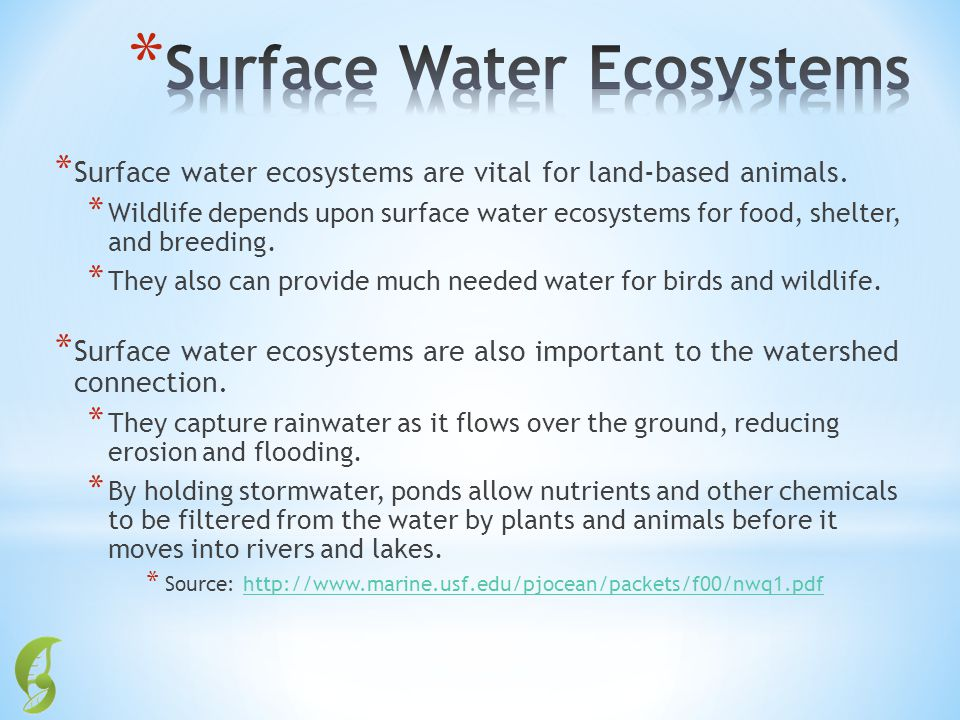 * Surface water ecosystems are vital for land-based animals. * Wildlife depends upon surface water ecosystems for food, shelter, and breeding. * They