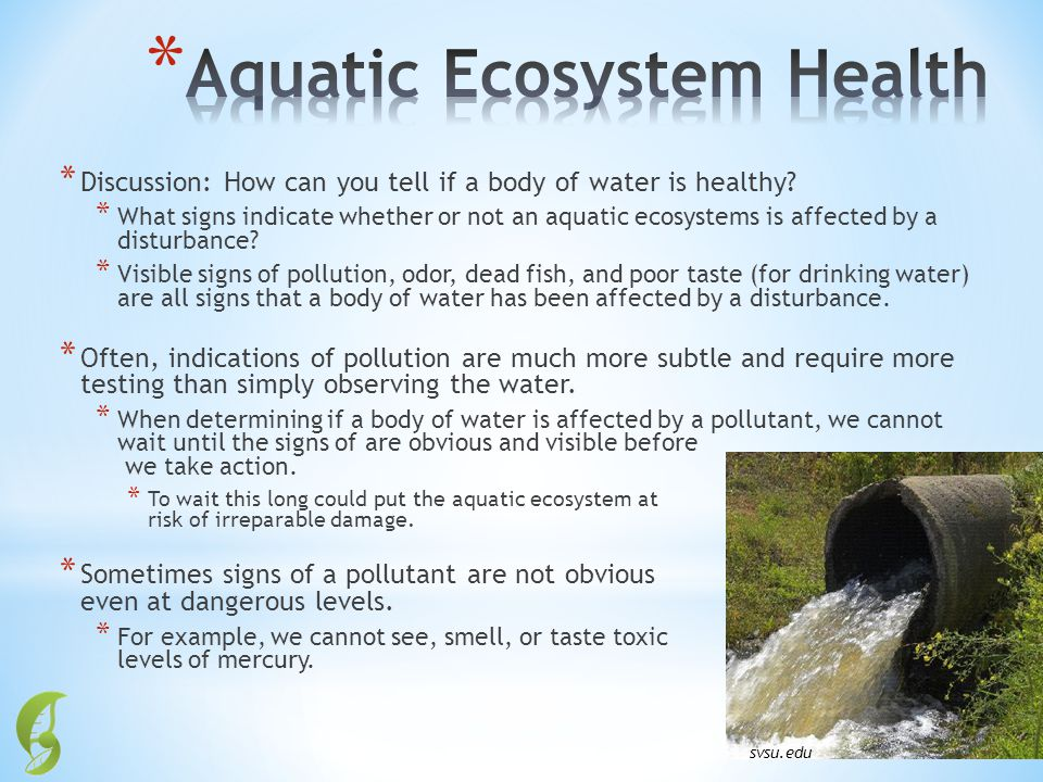 * Discussion: How can you tell if a body of water is healthy? * What signs indicate whether or not an aquatic ecosystems is affected by a disturbance?