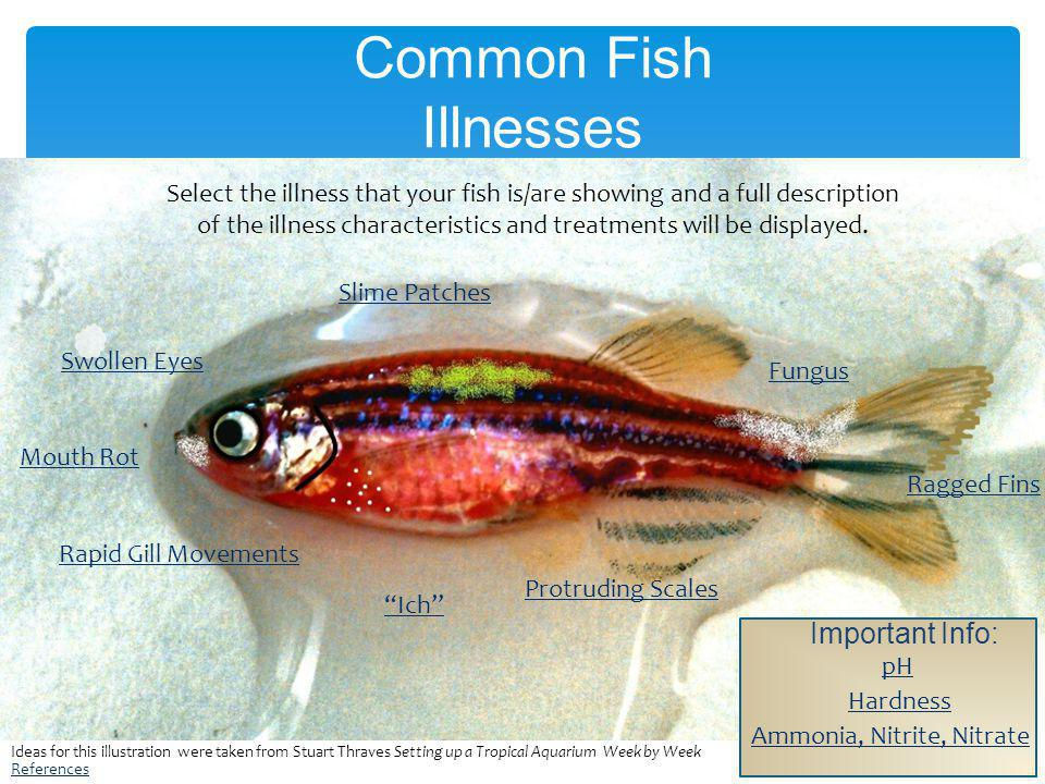 Common Fish Illnesses Ich Protruding Scales Swollen Eyes Mouth Rot Slime Patches Fungus Ragged Fins Rapid Gill Movements Select the illness that your fish is/are showing and a full description of the illness characteristics and treatments will be displayed.