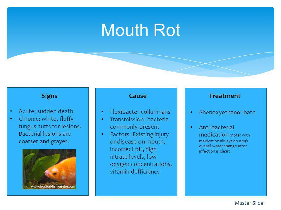 Master Slide Mouth Rot Treatment Phenoxyethanol bath Anti-bacterial medication (note: with medication always do a 25% overall water change after infec