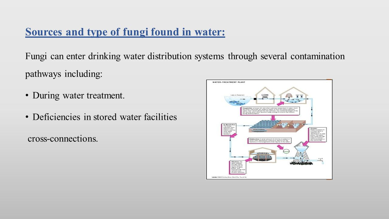 Sources and type of fungi found in water: Mains breaks and intrusions.