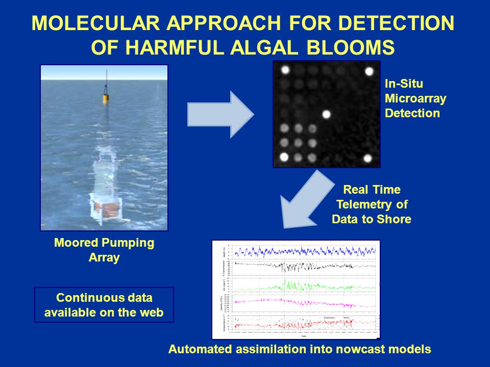MOLECULAR APPROACH FOR DETECTION OF HARMFUL ALGAL BLOOMS Moored Pumping Array Automated assimilation into nowcast models In-Situ Microarray Detection Continuous data available on the web Real Time Telemetry of Data to Shore
