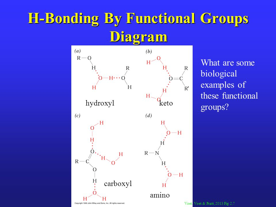 H-Bonding By Functional Groups Diagram Voet. Voet & Pratt, 2013 Fig 2.7 hydroxylketo carboxyl amino What are some biological examples of these functio