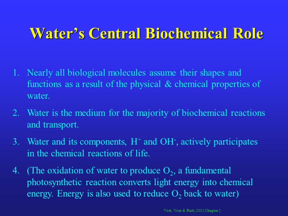 Waters Central Biochemical Role 1.Nearly all biological molecules assume their shapes and functions as a result of the physical & chemical properties