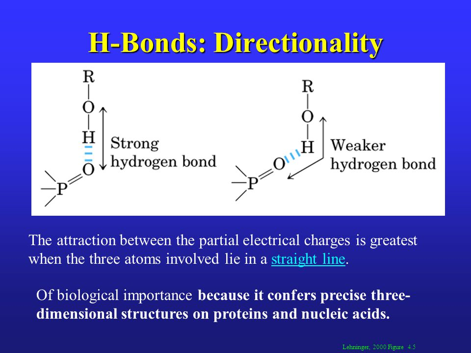 H-Bonds: Directionality Lehninger, 2000 Figure 4.5 The attraction between the partial electrical charges is greatest when the three atoms involved lie