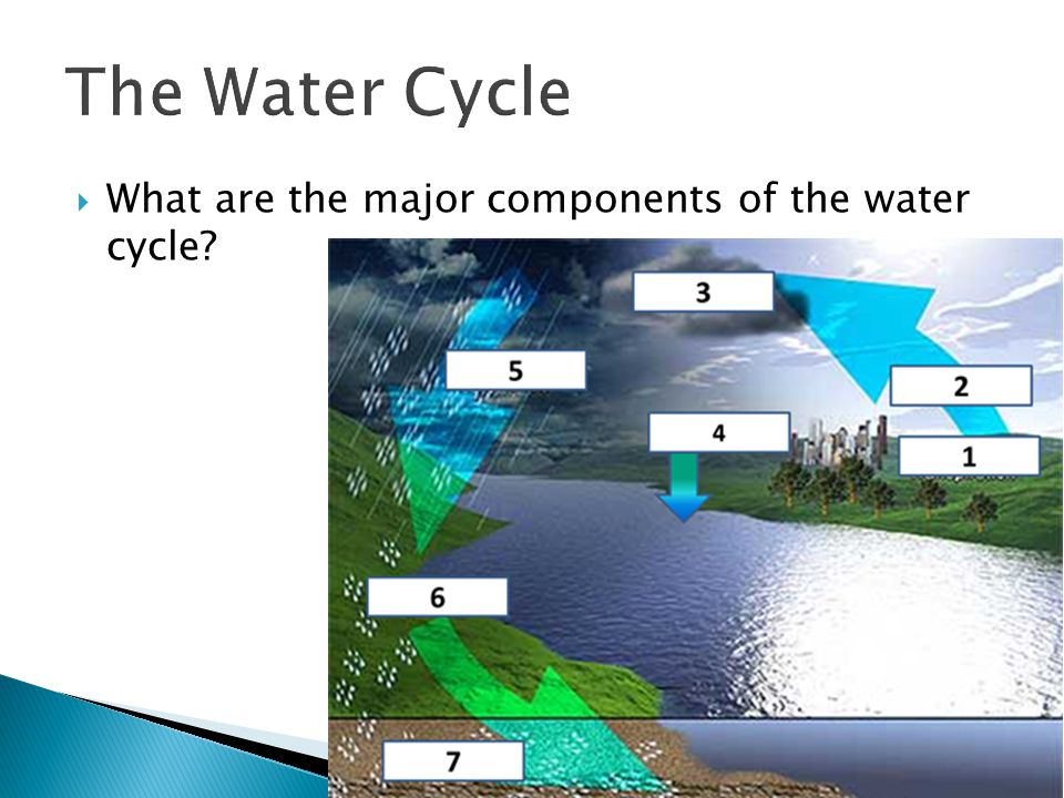 What are the major components of the water cycle?