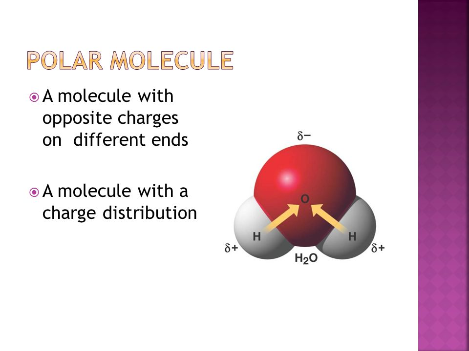 A molecule with opposite charges on different ends A molecule with a charge distribution