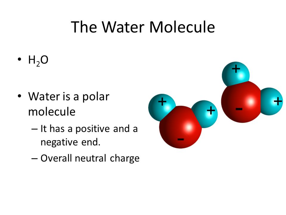 Polar Molecules Electrons are pulled closer to larger nucleus.