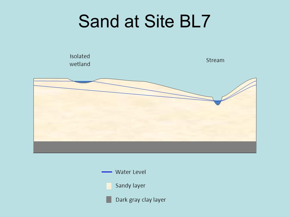 Isolated wetland Stream Dark gray clay layer Sandy layer Water Level Sand at Site BL7