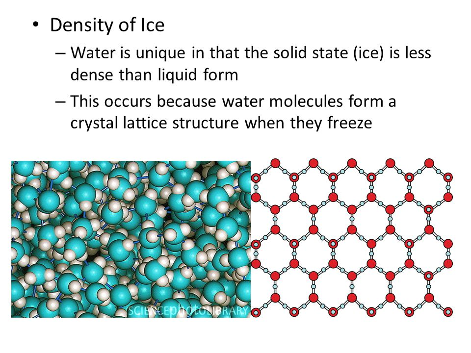 Density of Ice – Water is unique in that the solid state (ice) is less dense than liquid form – This occurs because water molecules form a crystal lat