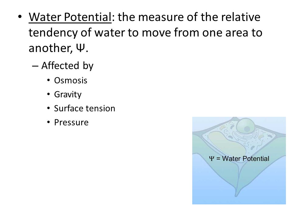Water Potential: the measure of the relative tendency of water to move from one area to another, Ψ.
