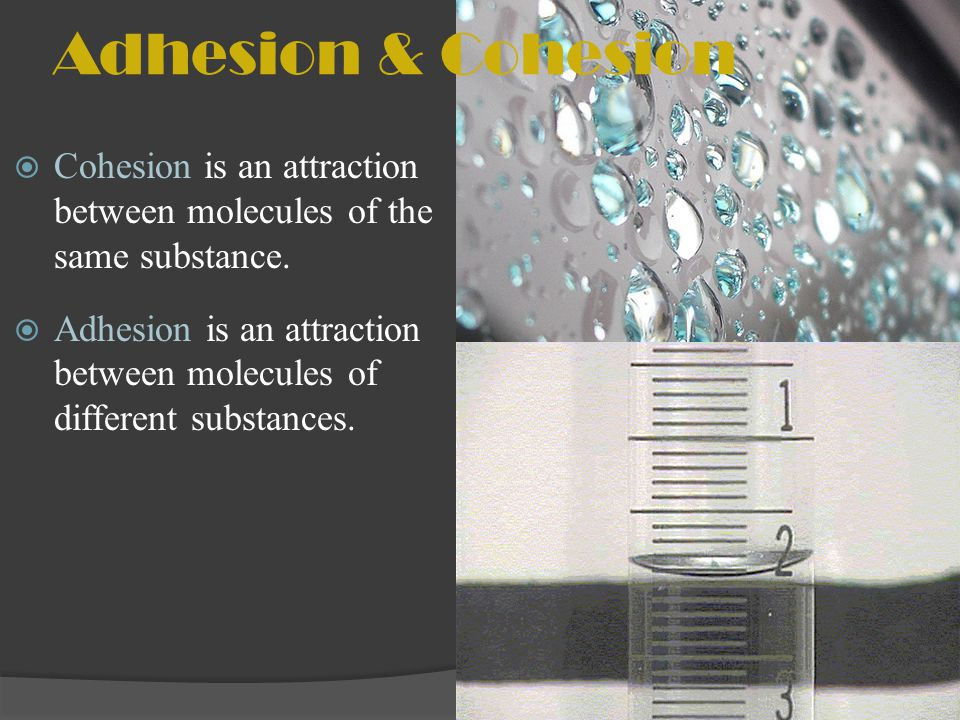 Surface Tension Cohesion can cause surface tension.