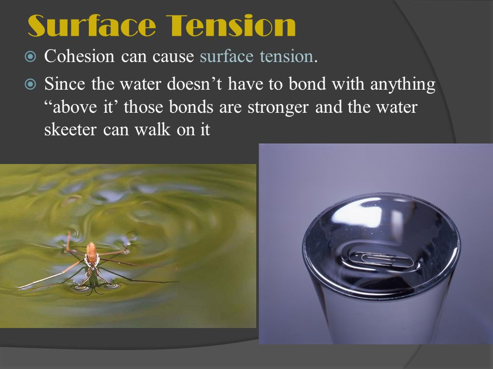 Surface Tension Cohesion can cause surface tension. Since the water doesnt have to bond with anything above it those bonds are stronger and the water