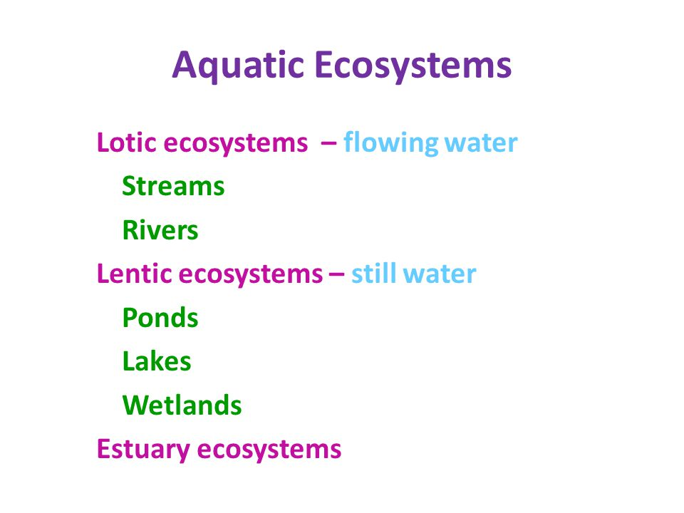 Aquatic Ecosystems Lotic ecosystems – flowing water Streams Rivers Lentic ecosystems – still water Ponds Lakes Wetlands Estuary ecosystems