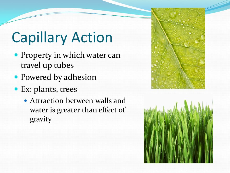 Capillary Action Property in which water can travel up tubes Powered by adhesion Ex: plants, trees Attraction between walls and water is greater than effect of gravity