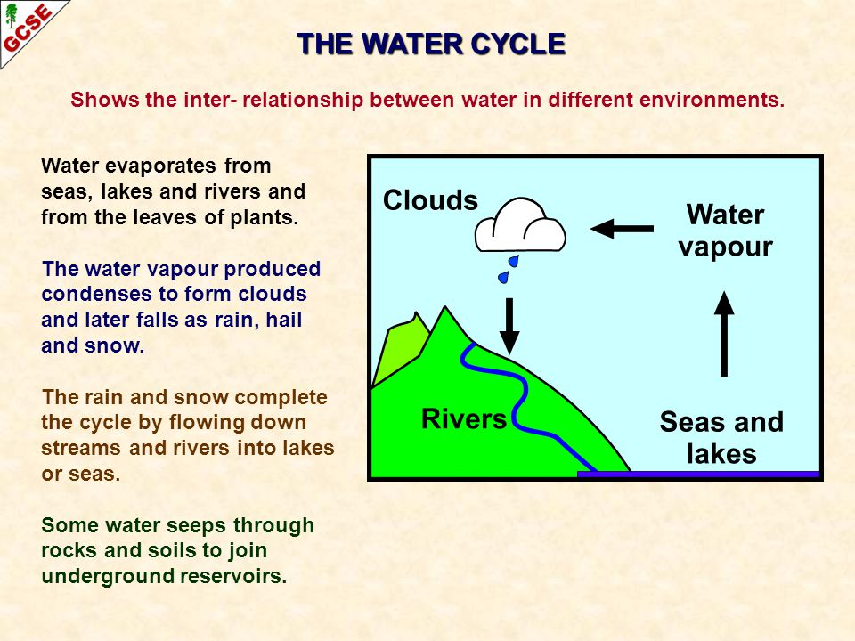THE WATER CYCLE Shows the inter- relationship between water in different environments. Water evaporates from seas, lakes and rivers and from the leave