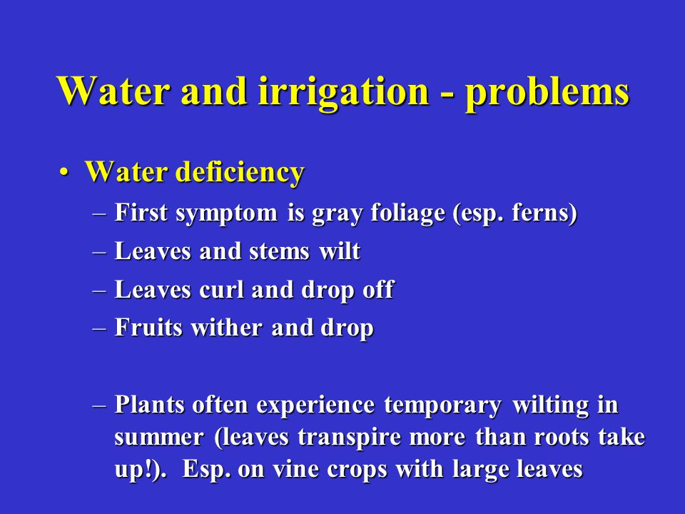 Water and irrigation - problems Water deficiencyWater deficiency –First symptom is gray foliage (esp.