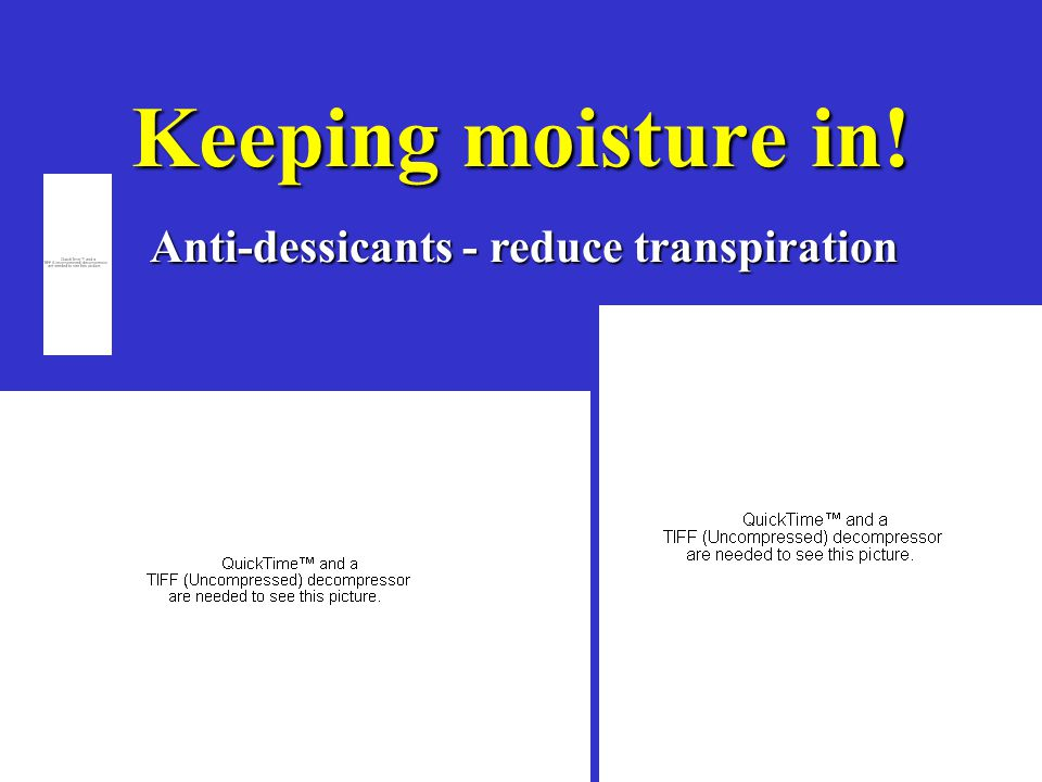 Keeping moisture in! Anti-dessicants - reduce transpiration