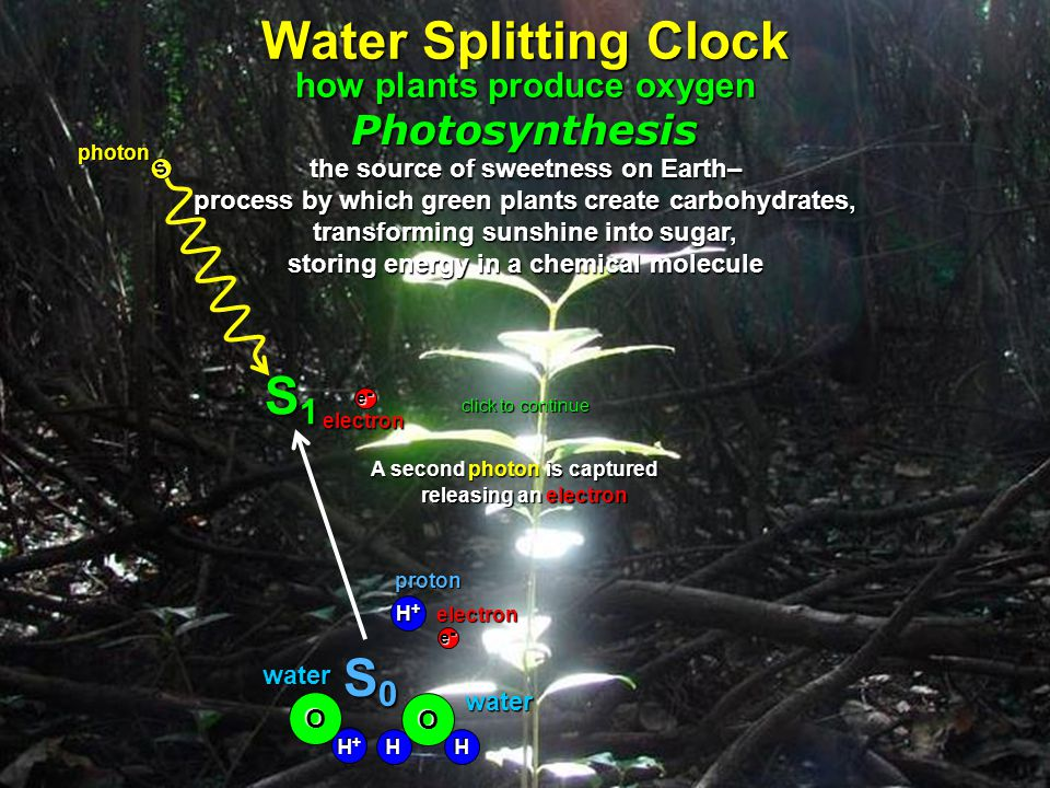 releasing an electron A second second photon transforming sunshine into sugar, storing energy in a chemical molecule H O Photosynthesis the source of