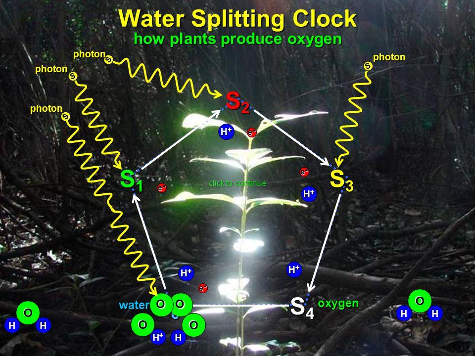 S4S4S4S4 S3S3S3S3 S2S2S2S2 S1S1S1S1 S0S0S0S0 water oxygen H+H+H+H+ H+H+H+H+ H+H+H+H+ H+H+H+H+ e-e-e-e- e-e-e-e- e-e-e-e- e-e-e-e- click to continue OO S photon S photon S photon S photon O O HHO HHO H O +H+H+H+H O H O