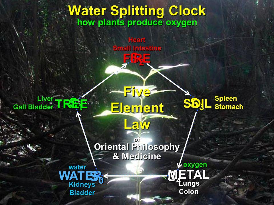 WATER KidneysBladder of Oriental Philosophy & Medicine Five Element Law Water Splitting Clock how plants produce oxygen S4S4S4S4 S3S3S3S3 S2S2S2S2 S1S1S1S1 S0S0S0S0 water oxygen TREE SOIL METAL Liver Gall Bladder Heart Small Intestine SpleenStomach LungsColon FIRE