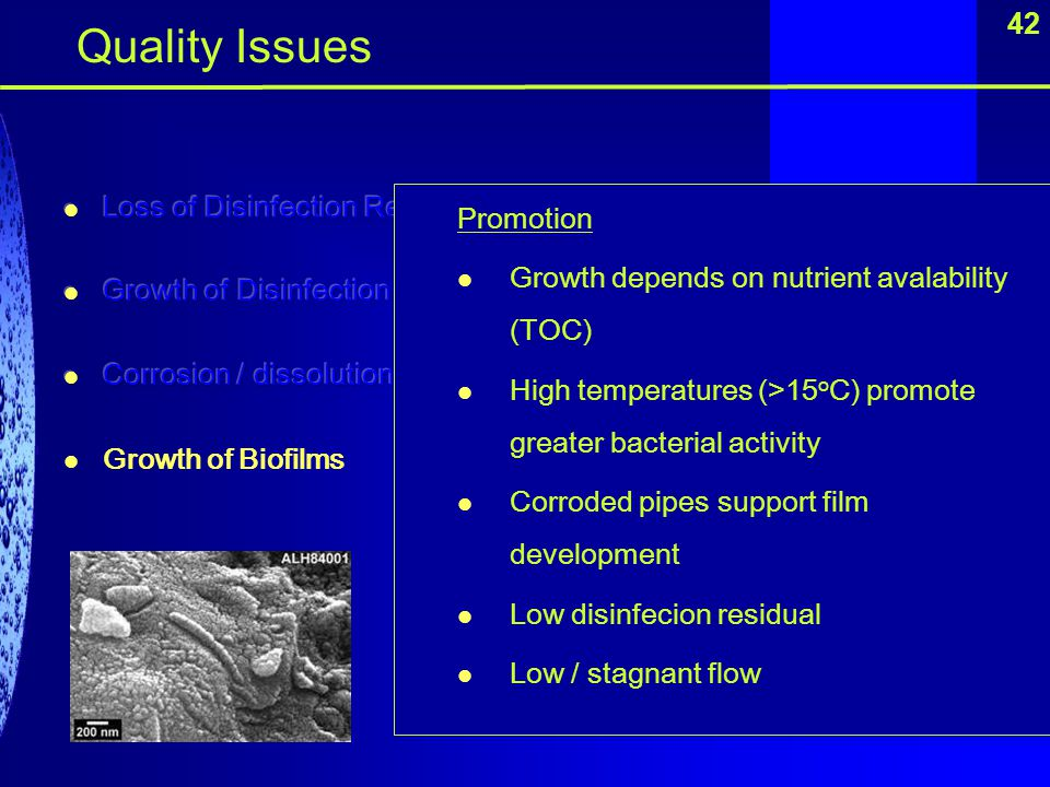 42 Quality Issues Promotion Growth depends on nutrient avalability (TOC) High temperatures (>15 o C) promote greater bacterial activity Corroded pipes