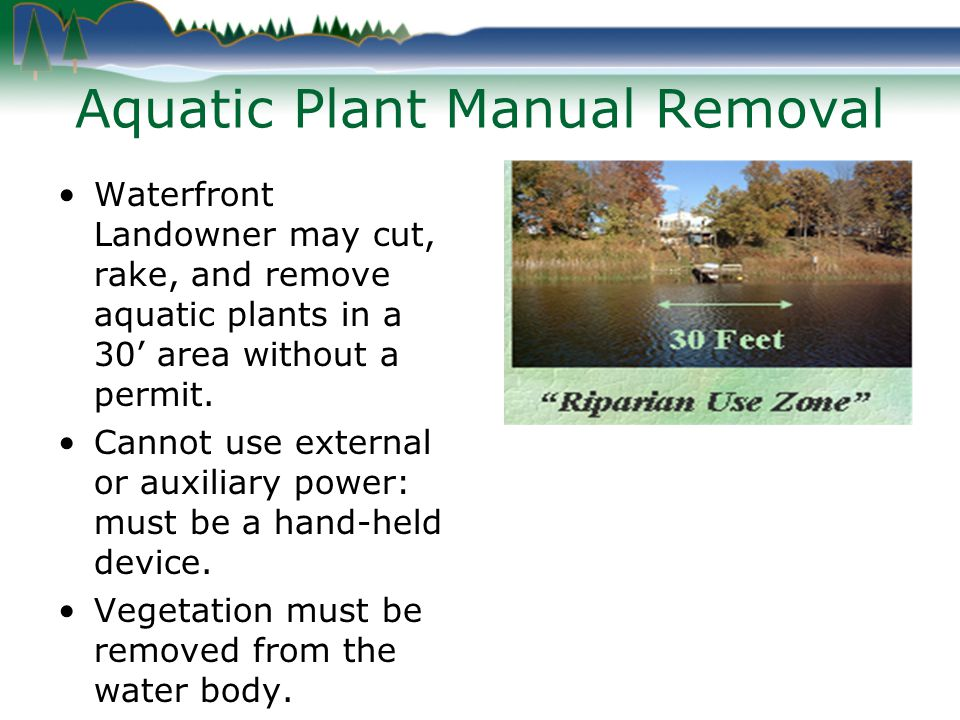 Aquatic Plant Manual Removal Waterfront Landowner may cut, rake, and remove aquatic plants in a 30 area without a permit.