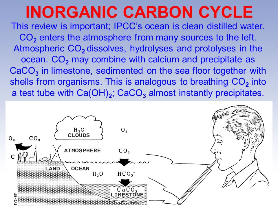INORGANIC CARBON CYCLE This review is important; IPCCs ocean is clean distilled water.