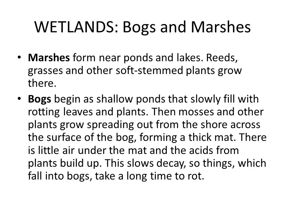 WETLANDS: Bogs and Marshes Marshes form near ponds and lakes. Reeds, grasses and other soft-stemmed plants grow there. Bogs begin as shallow ponds tha