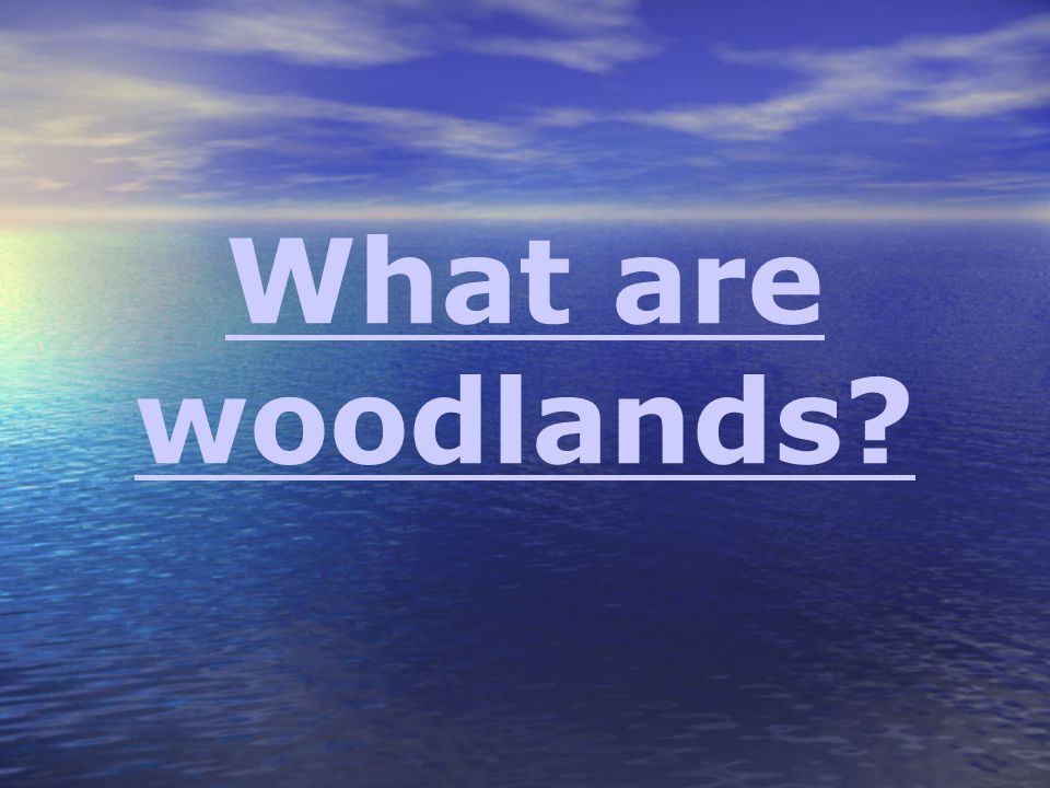 What are woodlands