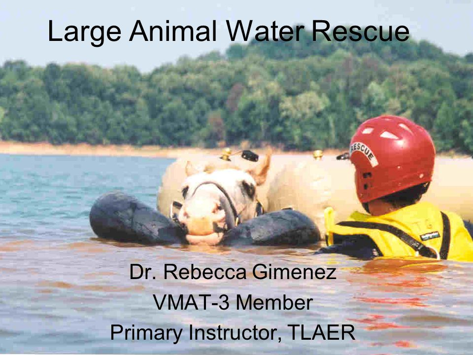 Large Animal Water Rescue Dr. Rebecca Gimenez VMAT-3 Member Primary Instructor, TLAER