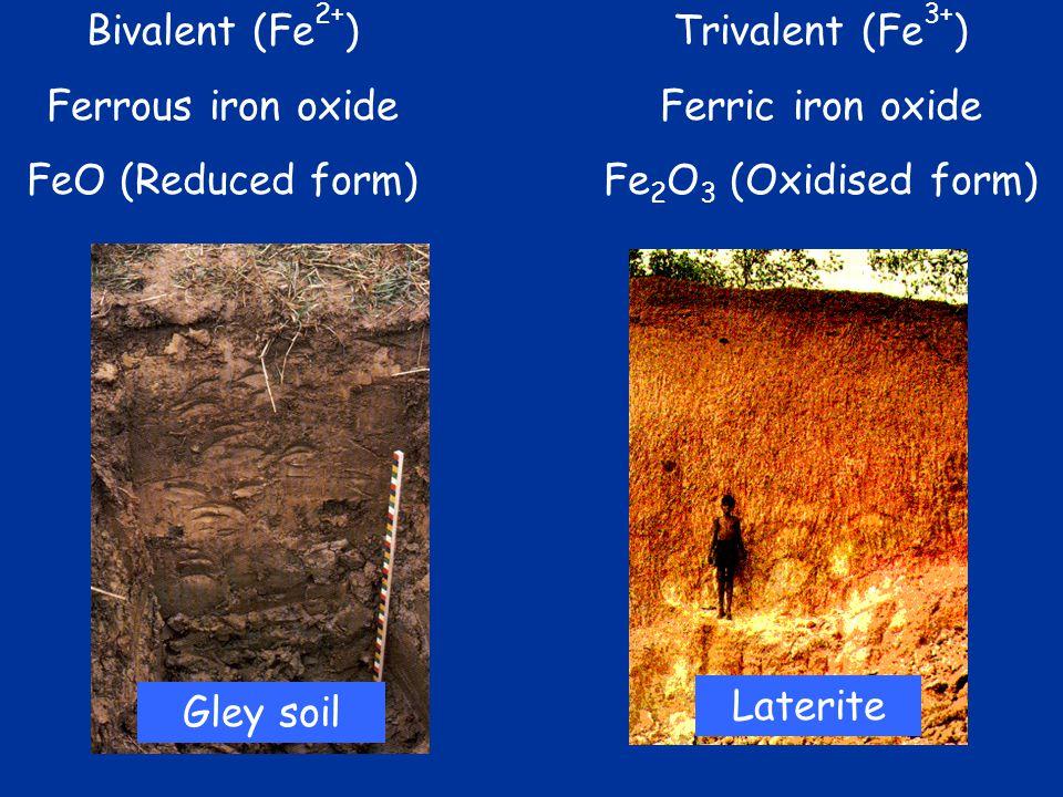 Bivalent (Fe 2+ ) Ferrous iron oxide FeO (Reduced form) Trivalent (Fe 3+ ) Ferric iron oxide Fe 2 O 3 (Oxidised form) Gley soil Laterite