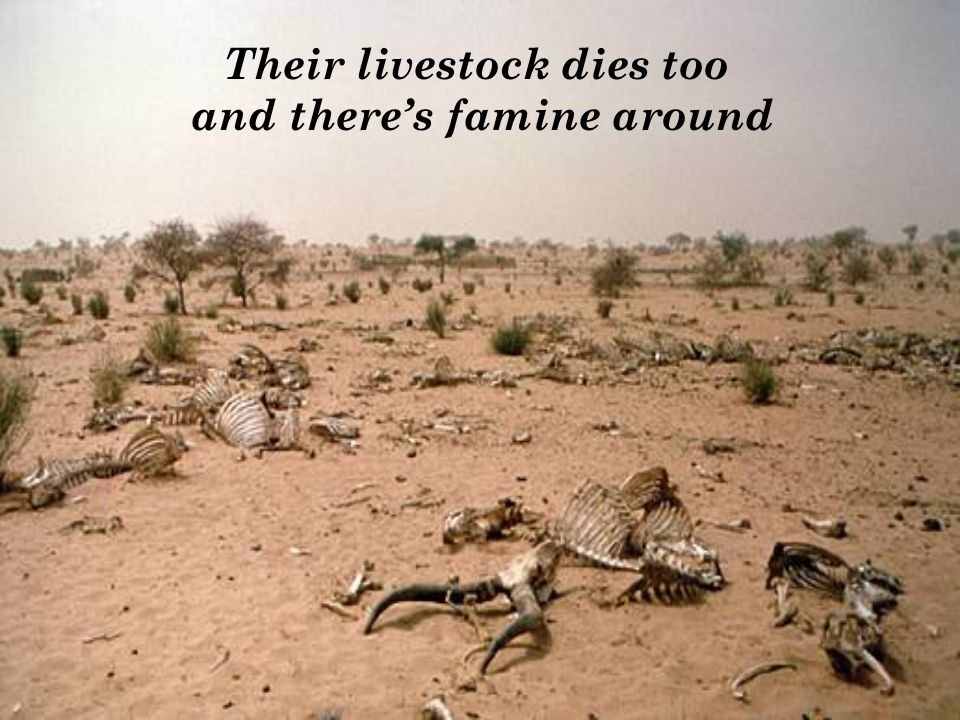 Their livestock dies too and theres famine around