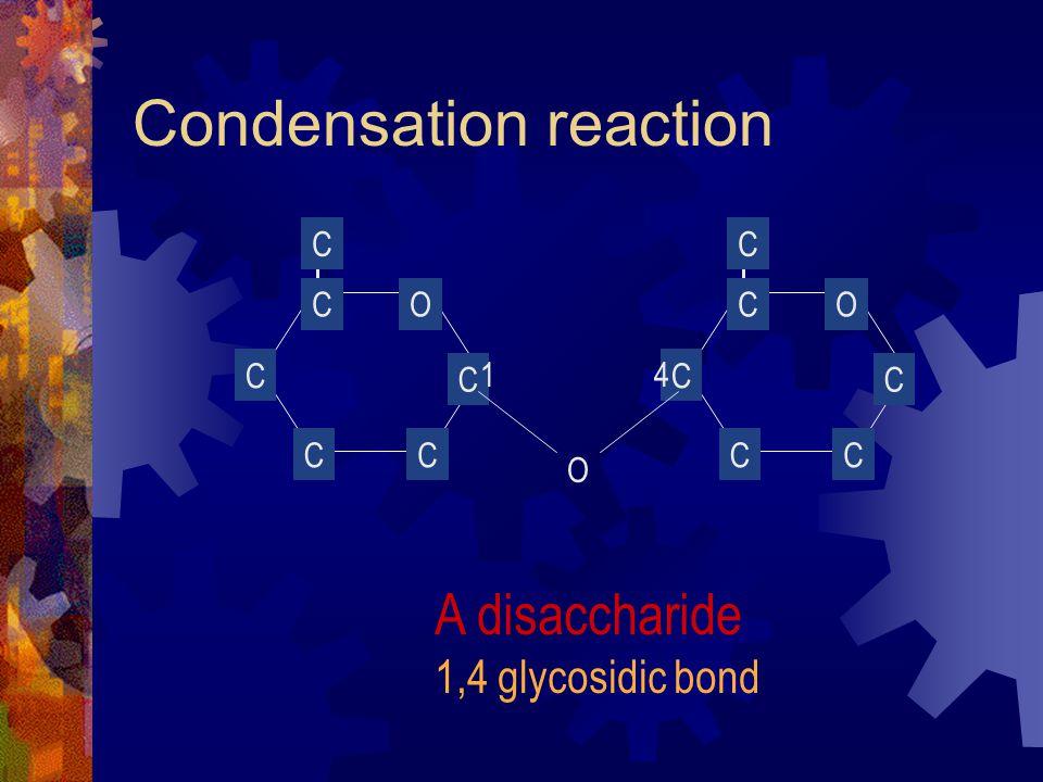 O CC C C C CO CC C C C C O A disaccharide 1,4 glycosidic bond 41