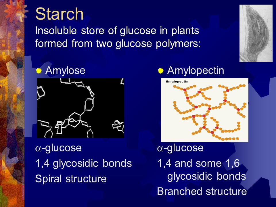 Starch Insoluble store of glucose in plants formed from two glucose polymers: Amylose -glucose 1,4 glycosidic bonds Spiral structure Amylopectin -gluc