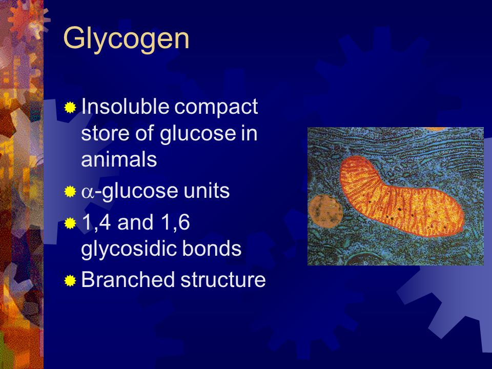 Glycogen Insoluble compact store of glucose in animals -glucose units 1,4 and 1,6 glycosidic bonds Branched structure