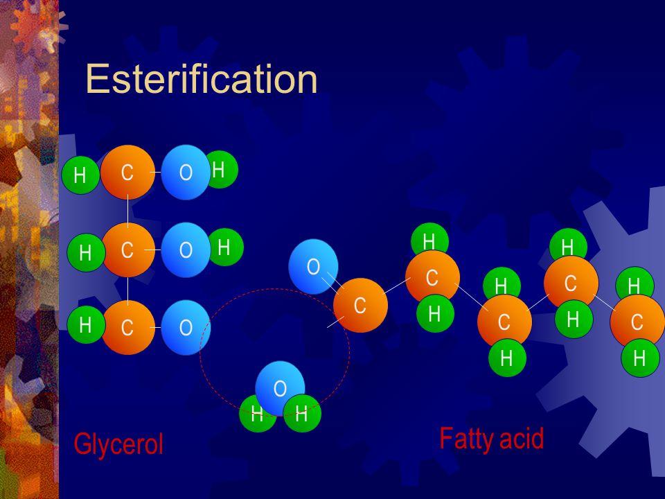 Esterification H C H C C H H H H O O O C O O H C H H C H H C H H C H H Glycerol Fatty acid
