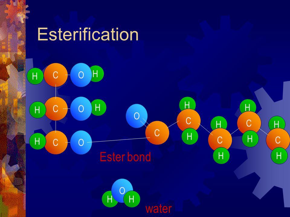 Esterification H C H C C H H H H O O O C O O H C H H C H H C H H C H H Ester bond water