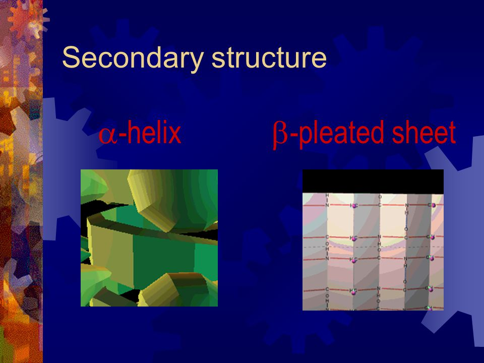 Secondary structure -helix -pleated sheet
